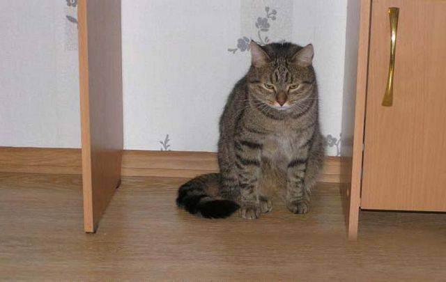 Как наказать кота чтобы он понял: нужно ли это делать и какие способы применимы