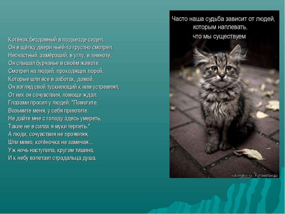 Почему котенок мяукает постоянно: возможные причины