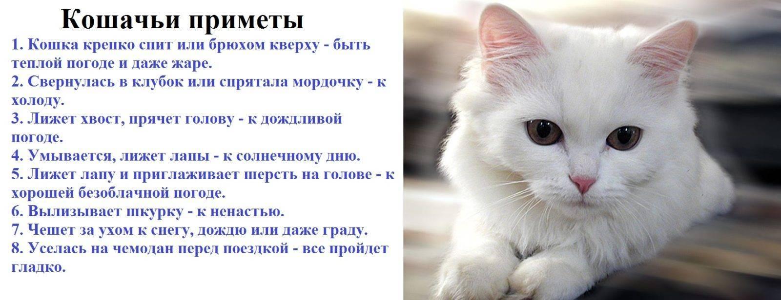 Почему кошки уходят из дома: причины и поверья про уход котов из дома