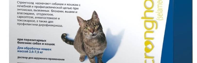 Стронгхолд для кошек — отзывы ветеринаров и владельцев