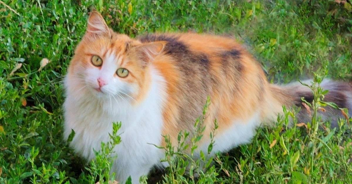 Бывают ли трехцветные коты или только кошки?