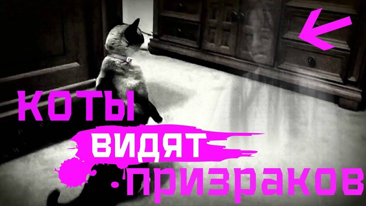 Кошки видят потусторонний мир – правда ли это