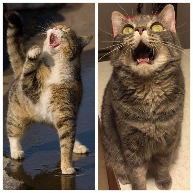 Почему кошка мяукает без причины: как отучить
