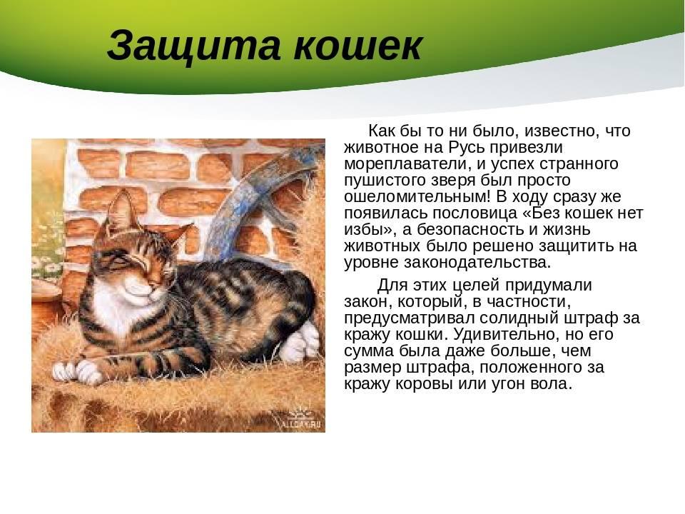 Откуда появились кошки, от кого произошли, кто является диким предком домашних питомцев?