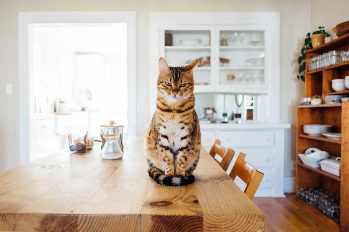 Какая польза от кошки в квартире