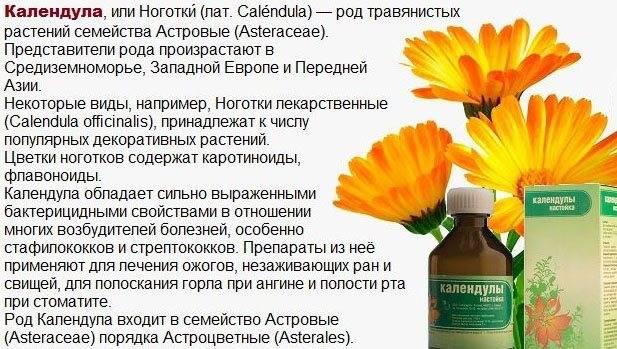 Календула — лечебные свойства и противопоказания, применение ноготков