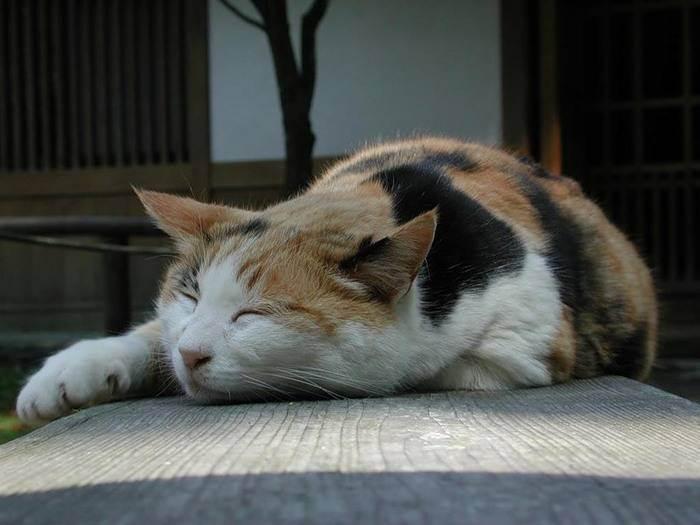 Что делать, если кот отравился