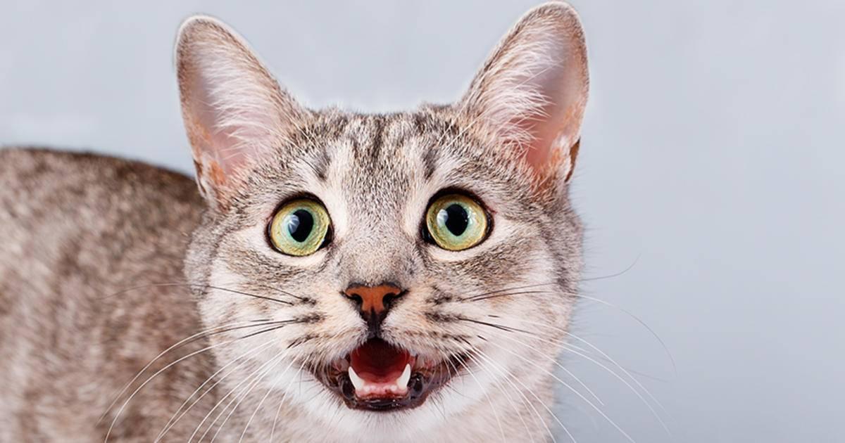 Почему у кошки пахнет изо рта: причины и лечение