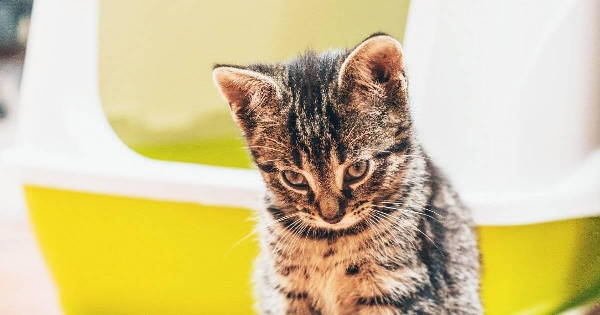 Как пользоваться лоток для кошек: объясняем обстоятельно