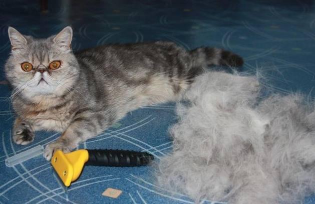 Как правильно вычесывать кошку: особенности проведения процедуры