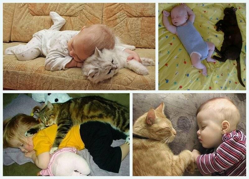 Почему кошка ложится рядом с больным