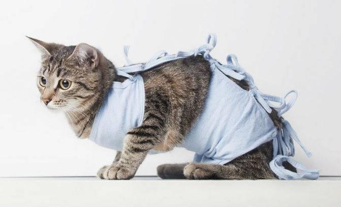 После стерилизации кошка стала гадить – почему возникает проблема и как с ней бороться?