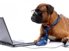 Ветеринар на дом, вызвать ветеринара в ростове 500 руб.