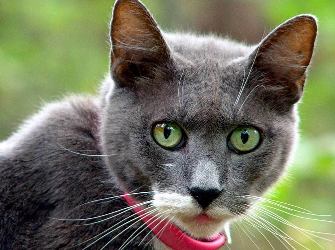 У кошки один зрачок больше другого после удара мордой