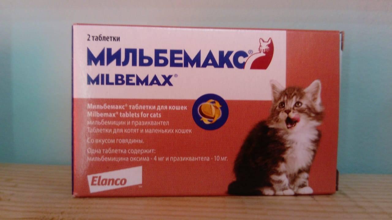 Гельмимакс-4 для кошек: инструкция по применению против гельминтов