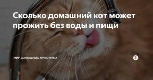 Сколько кошка может прожить без еды и воды, когда болеет, и при других обстоятельствах?