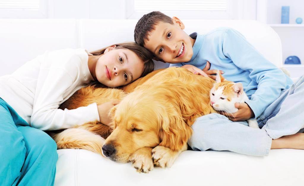 Заводить ли собаку? муки выбора