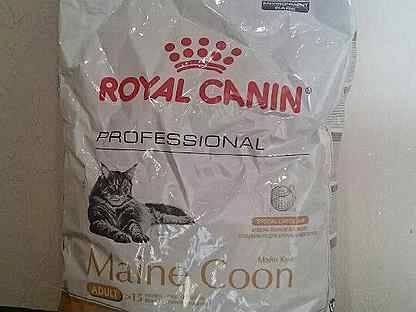 Что едят мейн куны-описание кормов для больших кошек