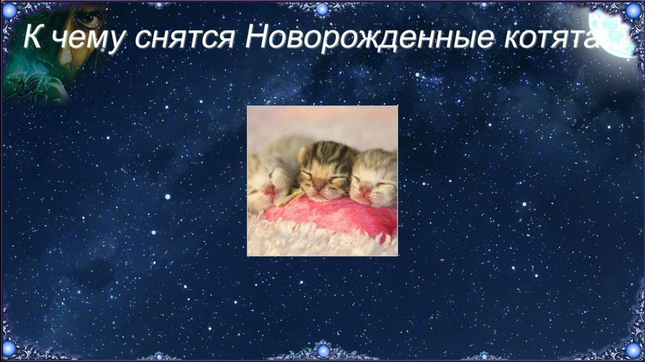 К чему снятся маленькие котята женщине: сонник про маленьких котят