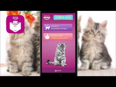 Кошки. как их понять и найти общий язык?