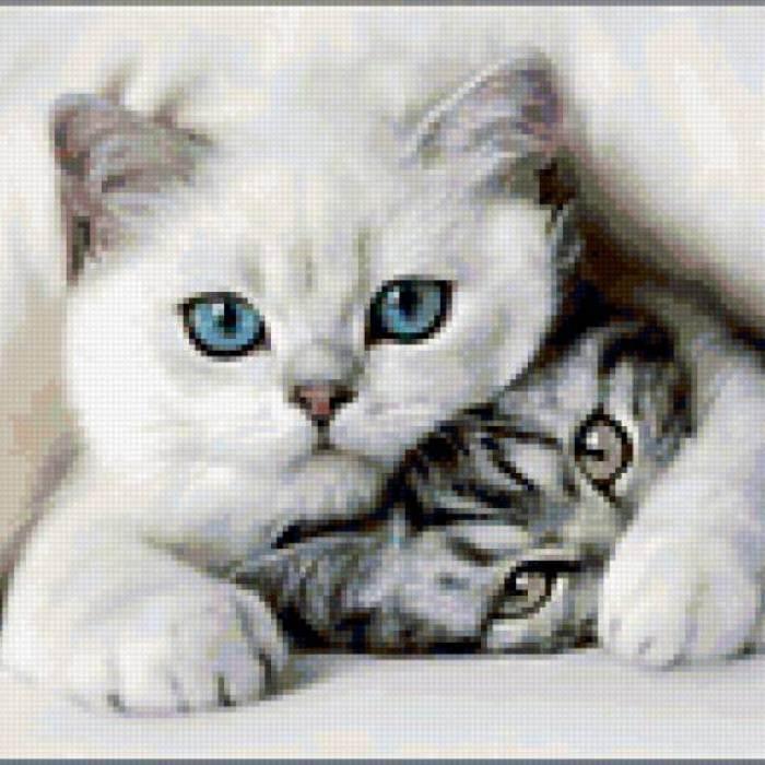 Как определить возраст кошки по сравнению с человеческим