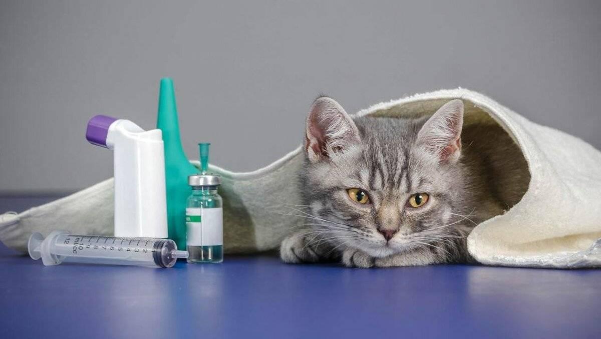 Почему кошка много пьет воды – основные причины повышенной жажды