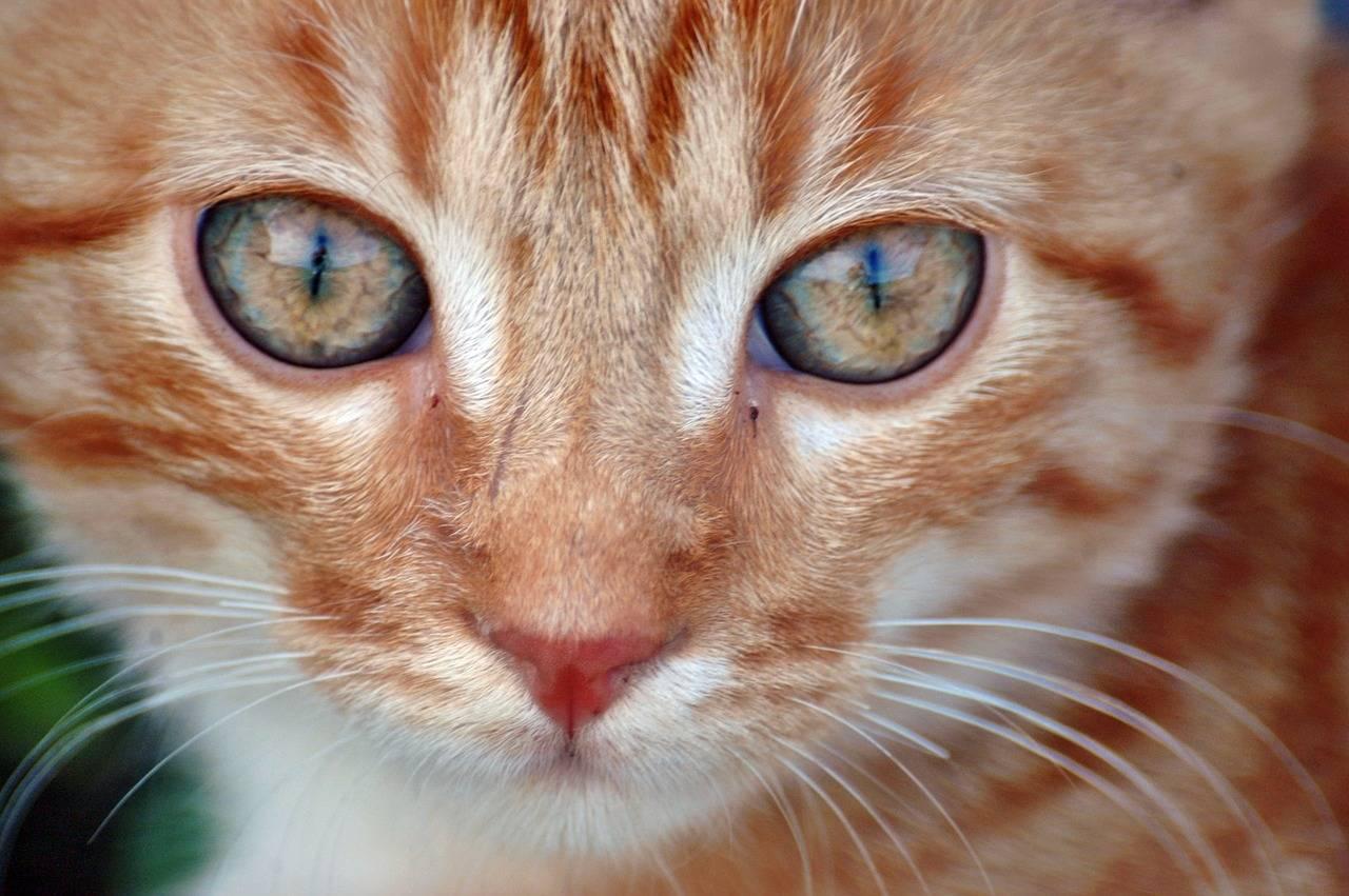 Когда и почему меняется цвет глаз у котят