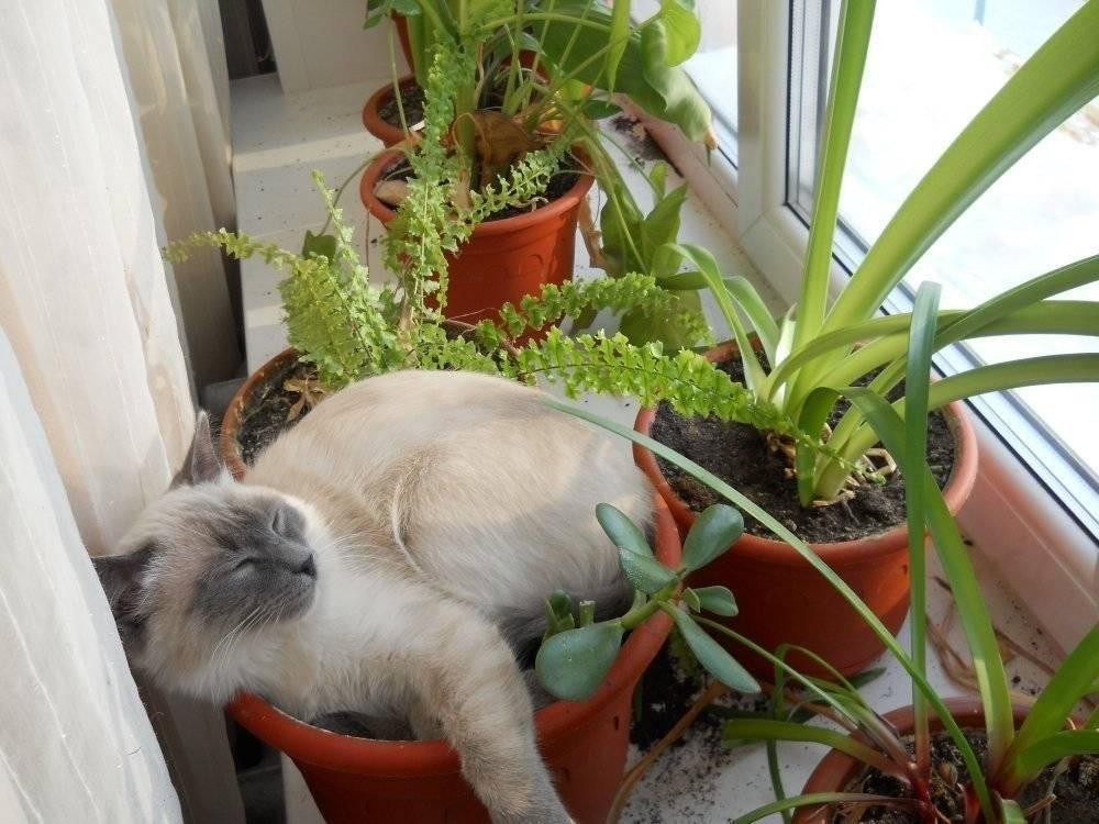Отучаем кошку лазить в цветочные горшки: нет рытью земли и копанию лапами!