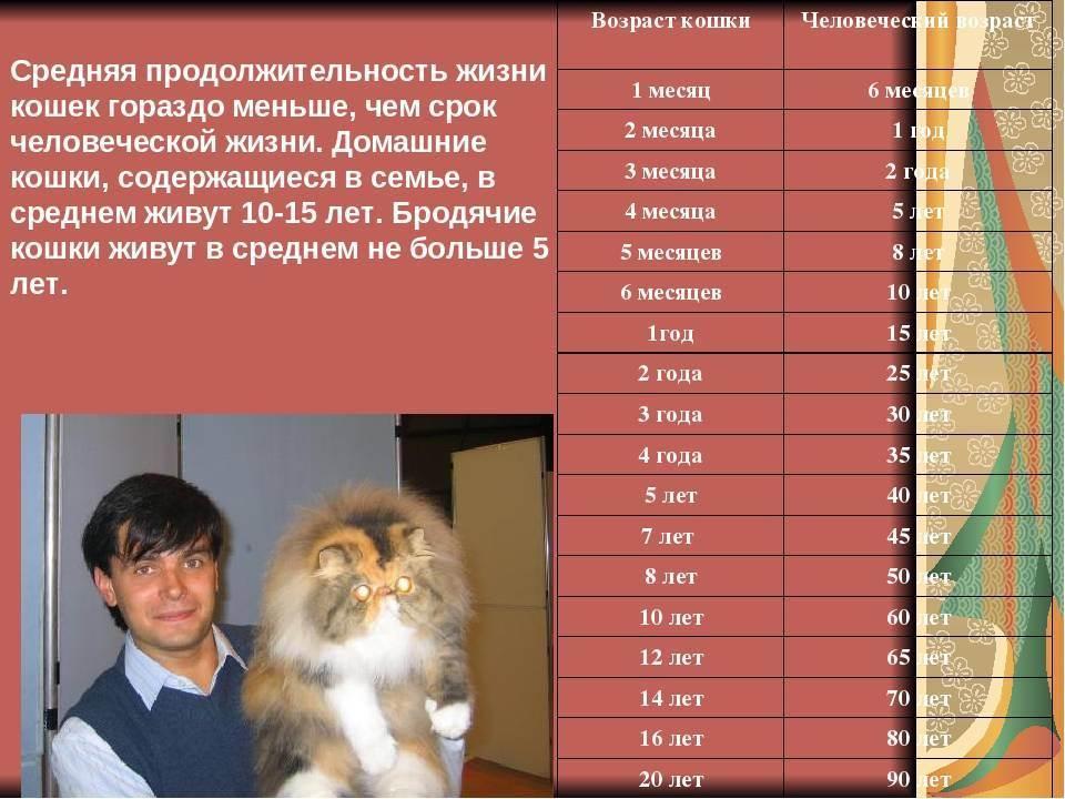 Продолжительность жизни котов