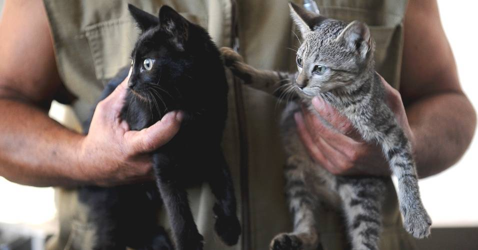 Когда котенка можно. когда и как лучше отлучать котенка от матери? подготовка котят к отлучению от кошки - новая медицина
