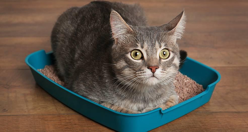 Как быстро приучить котенка к лотку без наполнителя? этапы приручения котов и кошек к решетке без наполнителя