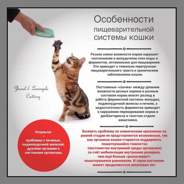 Какие корма для кошек рекомендуют ветеринары: бренды и торговые марки