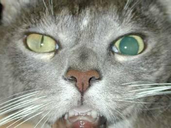 Почему у кота узкие зрачки почему у кота узкие зрачки
