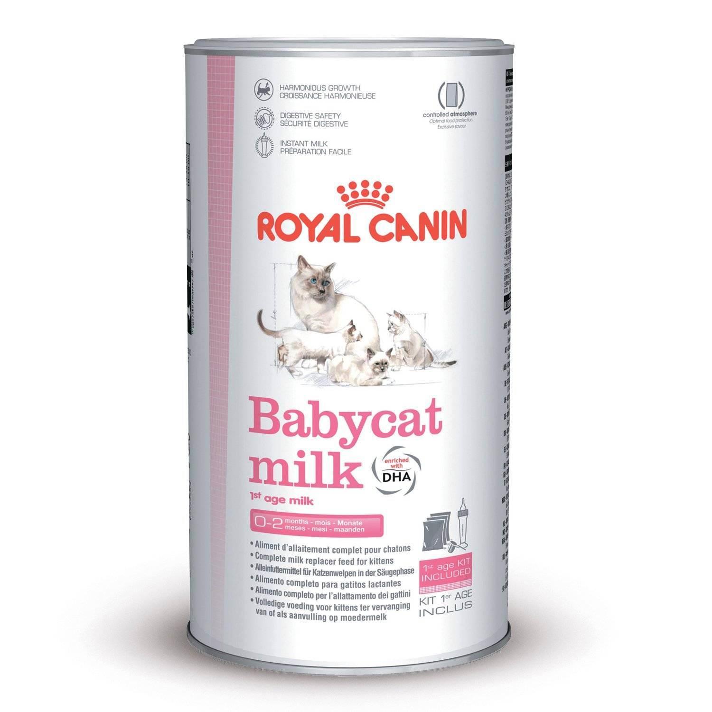 Можно ли котятам давать молоко: в качестве основного способа кормления, поить вместо воды, какой вид выбрать (коровье или козье)?