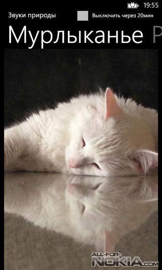 Звуки природы – кошка скачать все песни в хорошем качестве (320kbps)