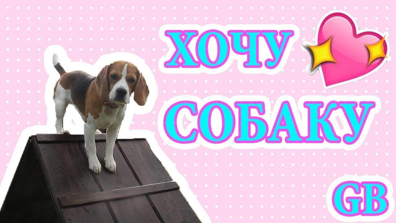 Как уговорить родителей завести собаку