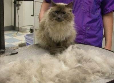 Что такое щетка-фурминатор и где приобрести расческу для кошек?
