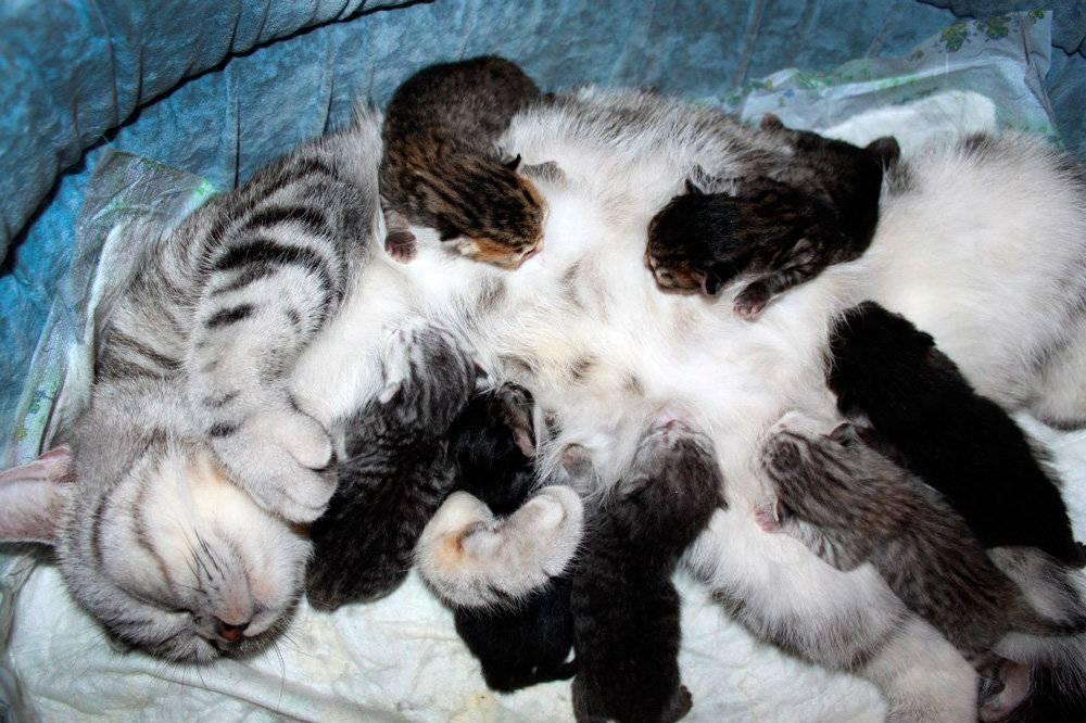 Пивные дрожжи для кошек: плюсы и минусы