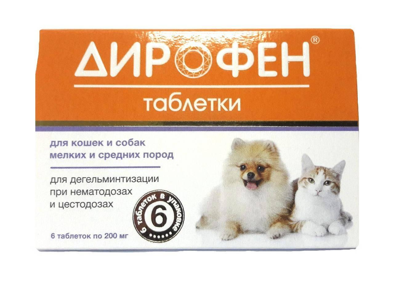 Дирофен для кошек: отзывы, инструкция по применению, противопоказания