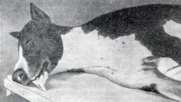 Послеродовая эклампсия у кошек: симптомы, лечение, профилактика послеродовая эклампсия у кошек: симптомы, лечение, профилактика