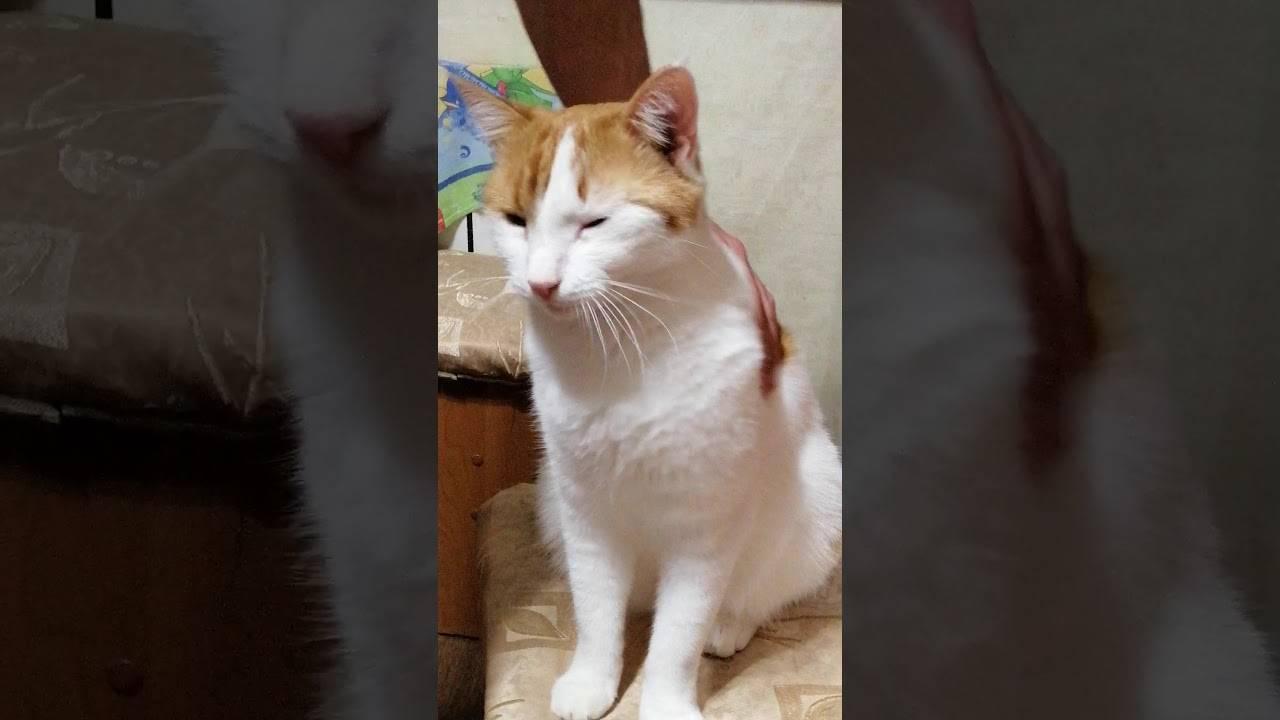Почему кошка заваливается на бок при ходьбе: причины