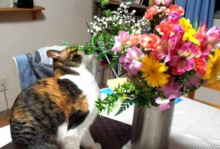 Кошка ест домашние цветы