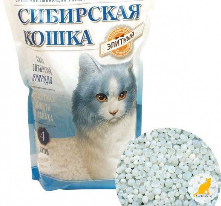 Почему котенок или взрослая кошка ест комкующийся или силикагелевый наполнитель для туалета, что делать?