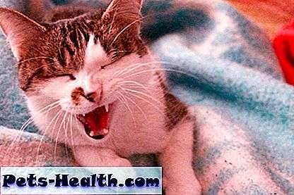 Почему кот часто чихает