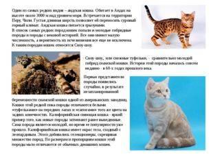 Китайская дикая кошка: содержание и уход в домашних условиях