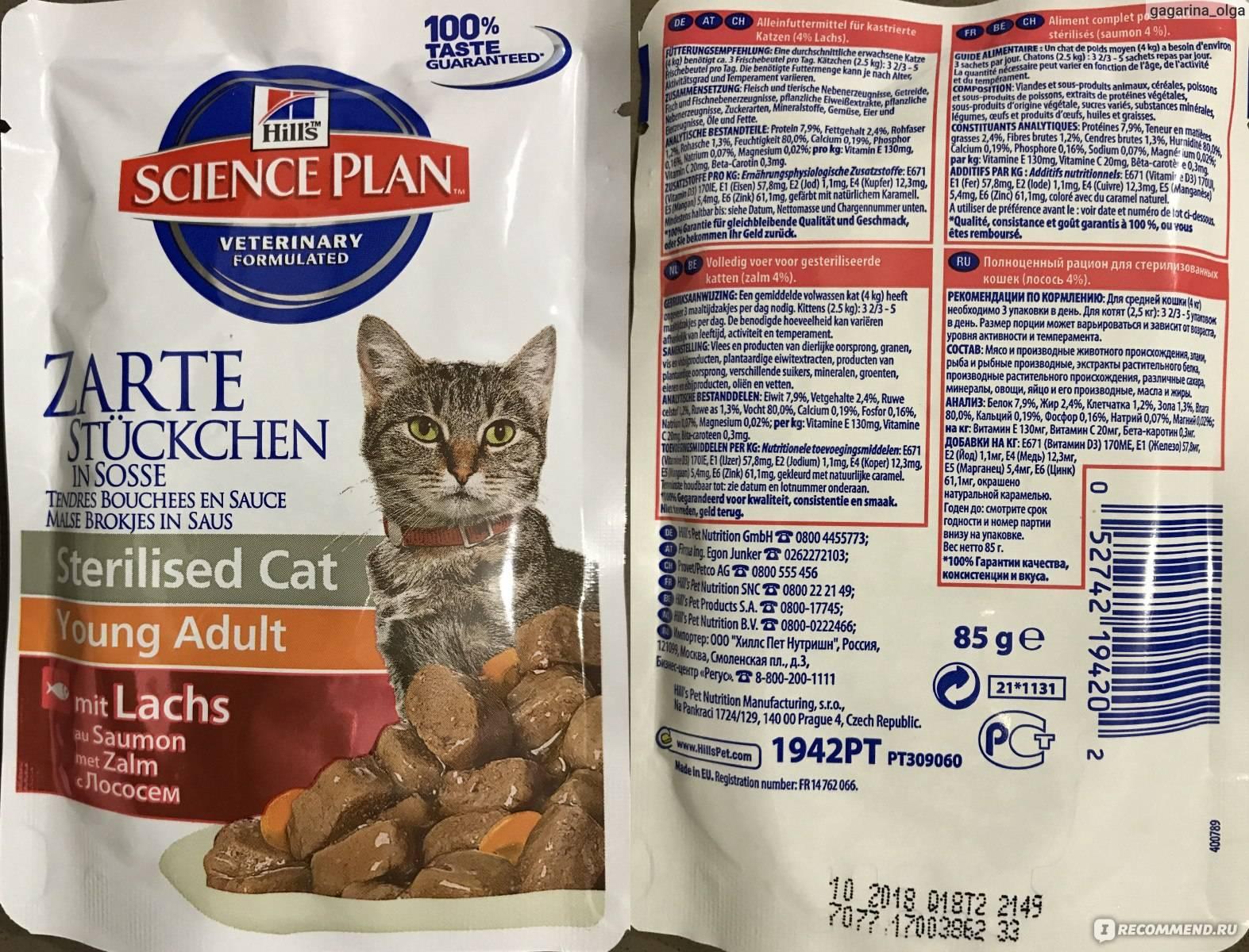 Корм для кастрированных котов и кошек: обзор лучших кормов