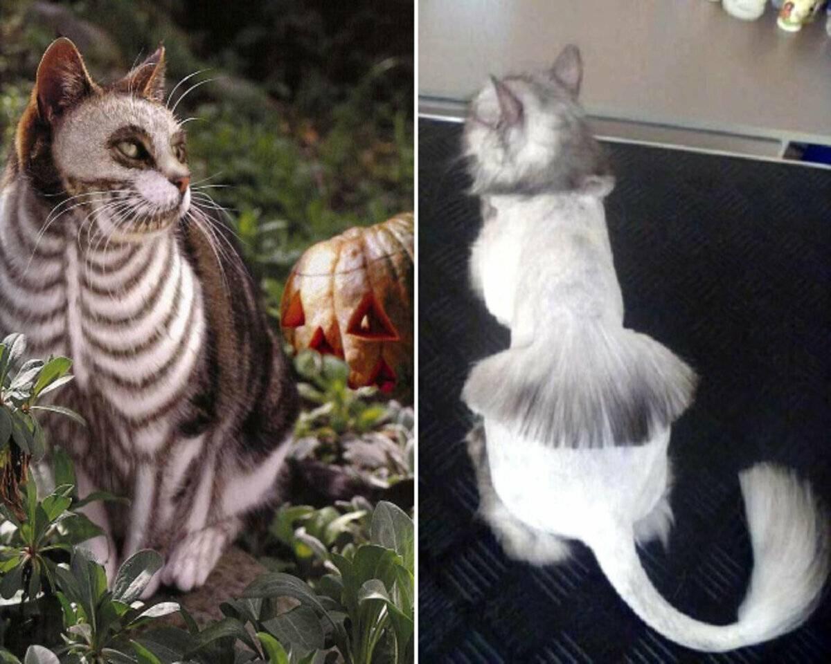 Стресс у кошек: причины и методы борьбы
