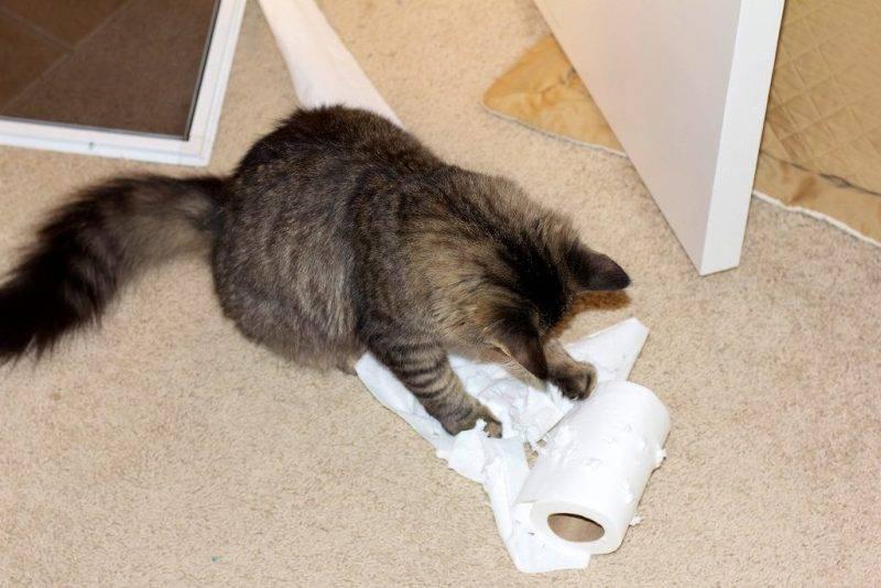 Как отучить кошку мяукать?