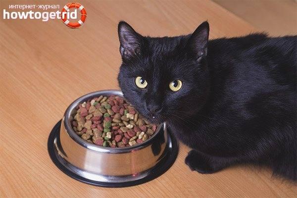Как повысить аппетит у кошки
