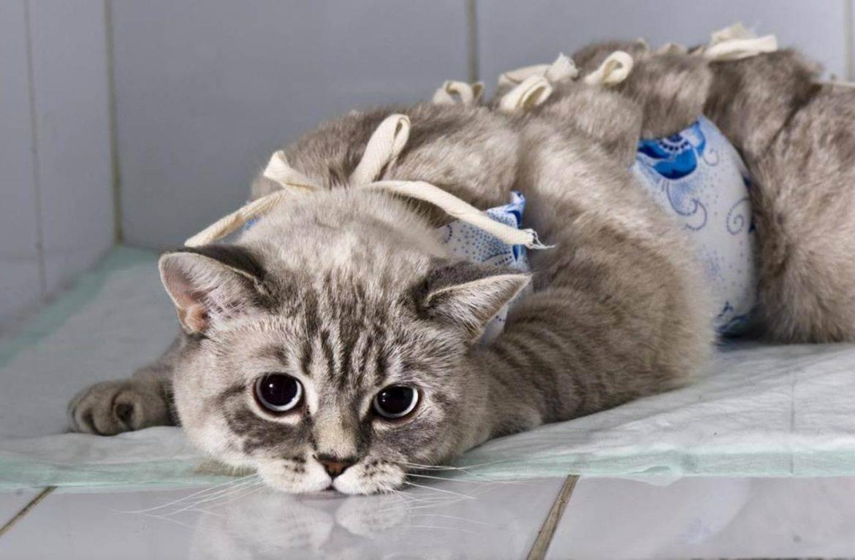 10 дней после стерилизации кошки